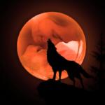 Duo Wolfsmond Logo