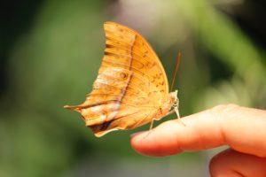 Loslassen Schmetterling Geschenk - Wild Life Tantra