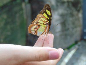 Hand Schmetterling